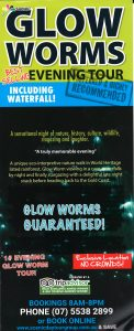 Scenic Glow Worm - New