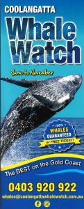 Coolangatta Whale Watch - 19
